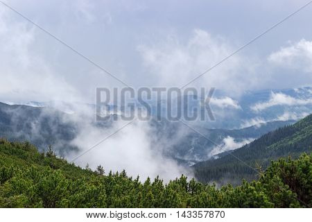 Mountain valley with clouds after the rain mountain ridges covered by spruce forest and thicket of a mountain pine in the foreground