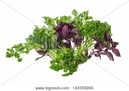 Bundle of fresh green dill coriander purple basil and two varieties of parsley on a light background