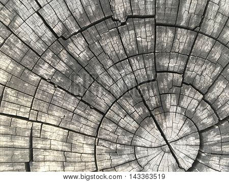 close up cross section and annual ring tree texture and background