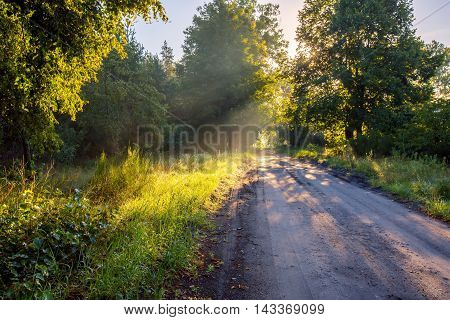 Beautiful Early Autumn European Forest Landscape