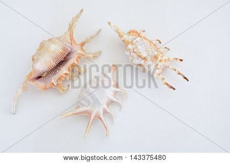 Various types of sea shells on a light background