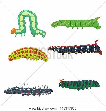 caterpillars set vector illustration isolated on a white background