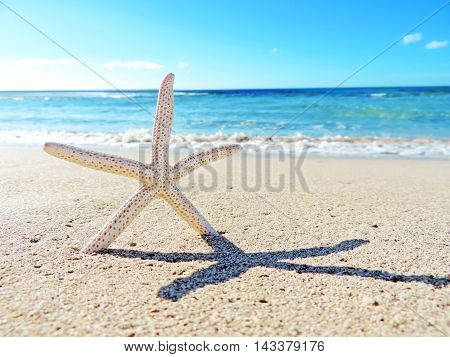 Starfish on the beach, with turquoise sea an copy space. Beach background.