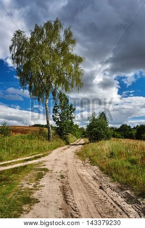 Birch at the crossroads of rural roads in Poland