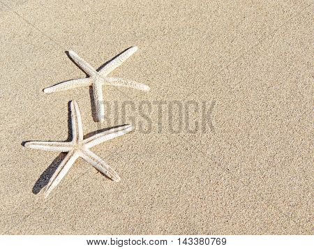 Starfishes on the sand, beach background with copy space.Sand texture.
