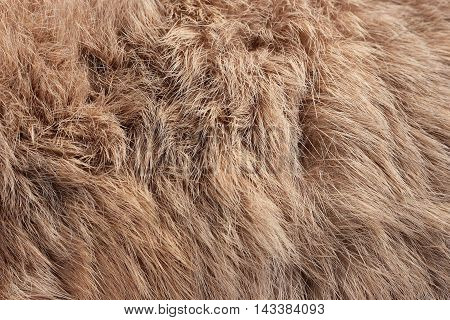 Rabbit Fur As Background