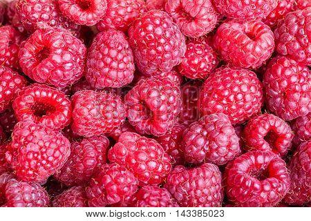 Many Berries Of Fresh Raspberry Close Up