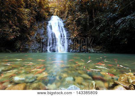 Deep forest Waterfall in Nong Khai Thailand
