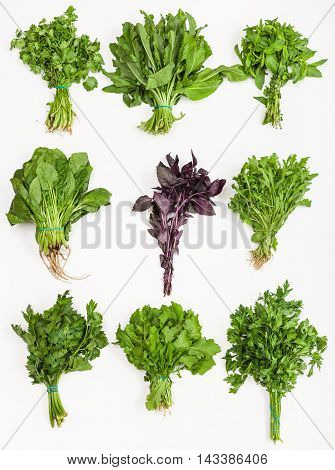 Set From Bunches Of Fresh Cut Green Herbs