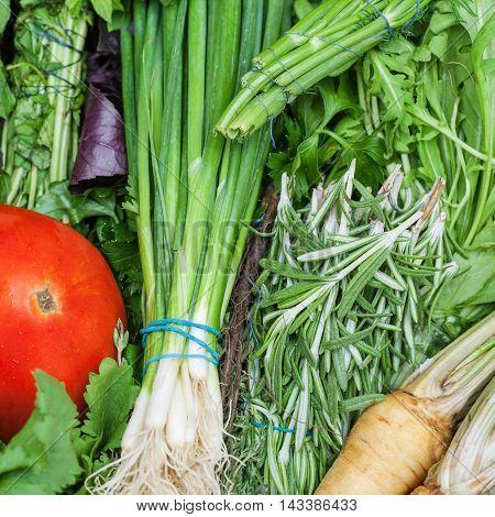 Bunches Of Fresh Cut Green Stuff Close Up