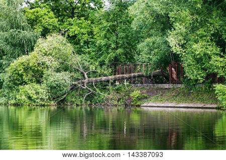 Fallen Tree In Pond After Strong Wind