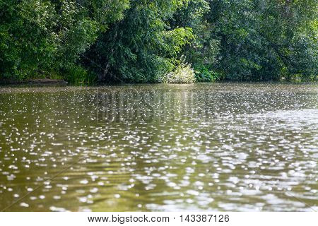 Raindrops On Surface Of Pond In Summer
