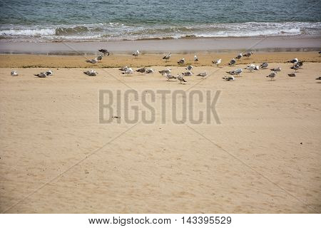 Photo of a beach with birds, sea, sand and sunlight