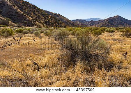 Grassland Field In Southern California