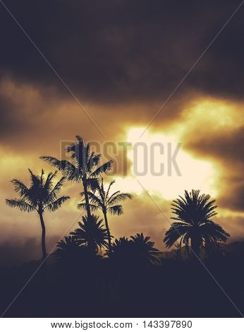 Retro Style Image Of Hawaii Palm Trees At Sunset With Copy Space