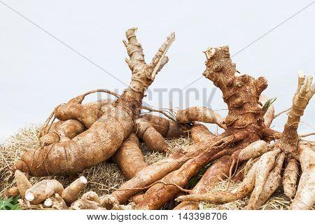 Tapioca Plants Cassava Cassava on the floor