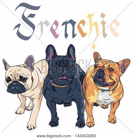 Vector three Black Masked Fawn, brindle and tan dogs French Bulldog breed