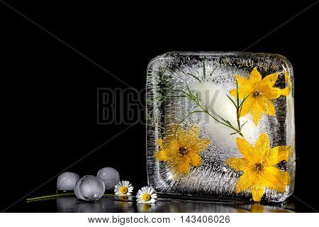 The composition of yellow flowers, frozen in ice. Isolate on black background