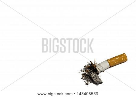 Single cigarette butt with ash on white background