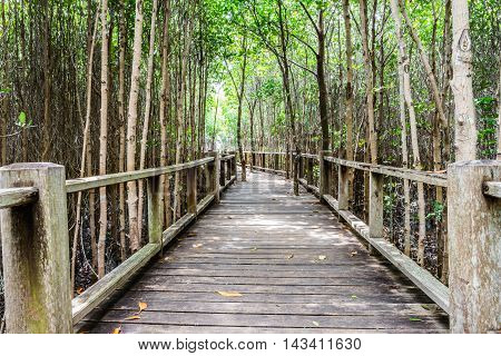 Wooden bridge leading to a hiking trail in a lush forest