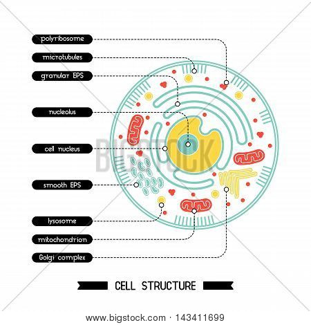 Isolated cell biology pictogram. Cell anatomy structure vector illustration. Cell structure detailed colorful anatomy with description.