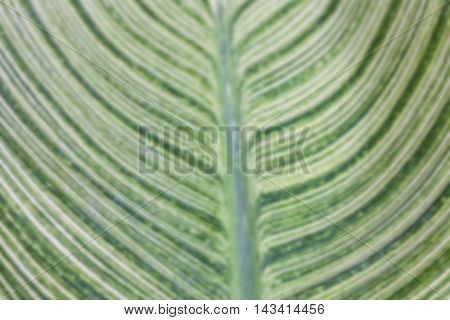 Green leaf for background. Green natural texture.Blur Background