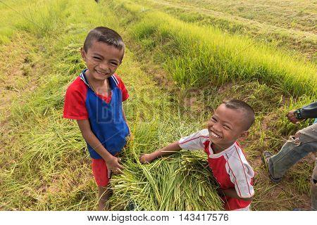 Little boy on the rural harvest grass .