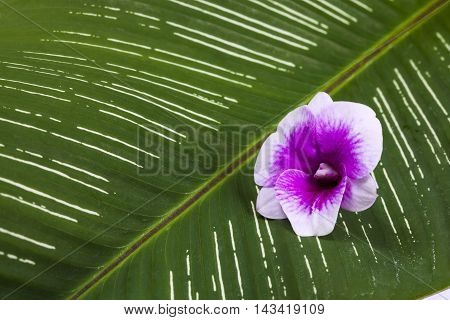 Flower orchid and leaf. Orchid on leaves.