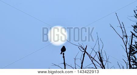 Sun of dawn and small bird on tree