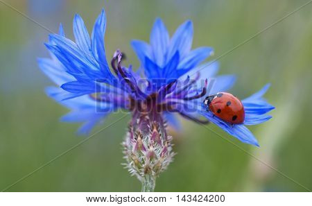 beautiful picture of a ladybug. if you need a ladybird can find here. It is perfect for what you need. buy now