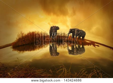 South Africa and Thailand the world's most beautiful elephants appear in images. the largest terrestrial beings show in front of us