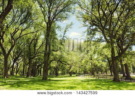 Central Park. New York USA. Green trees background