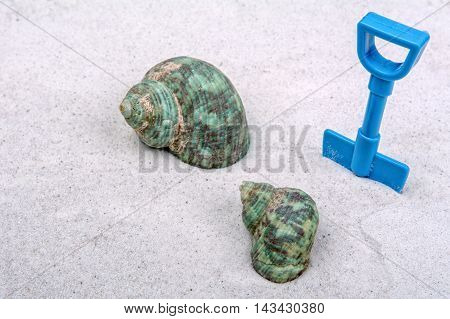 Marine shells and blue scoop on a grey sand background