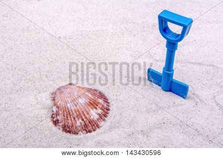 Marine shell and blue scoop on a grey sand background