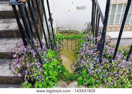 Overgrown House Entrance In London