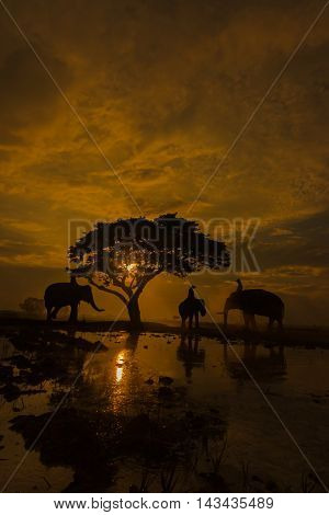 Elephant silhouette are under the tree at sunset.