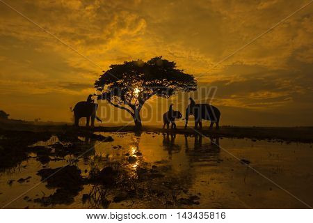 Silhouettes of elephants with at sunrise .