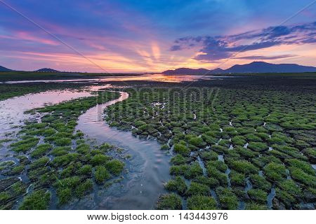 Small water way over green grass cracked land with beautiful sunset background