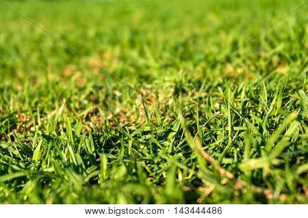 Green grass texture background. Low angle view with shallow DOF