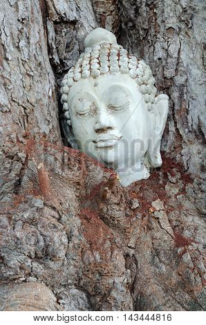 Buddha head in a natural tree texture background
