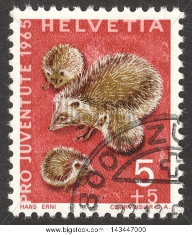 MOSCOW RUSSIA - CIRCA JULY 2016: a post stamp printed in SWITZERLAND shows hedgehogs (Erinaceus europaeus) the series