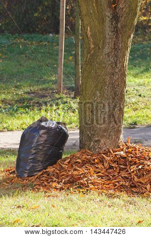 Heap Of Orange Leaves And Garbage Bag In Autumn Park