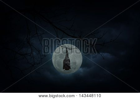 Bat sleep and hang on dead tree over moon and cloudy sky Mysterious background Halloween concept