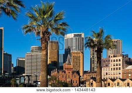 Sydney Central Business District cityscape with palm trees on the foreground. Skyscrapers modern city and nature