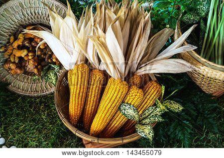 organic yellow dry corn in the basket