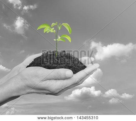 Hands holding a fresh small plant with soil over black and white sky with clouds Ecology concept