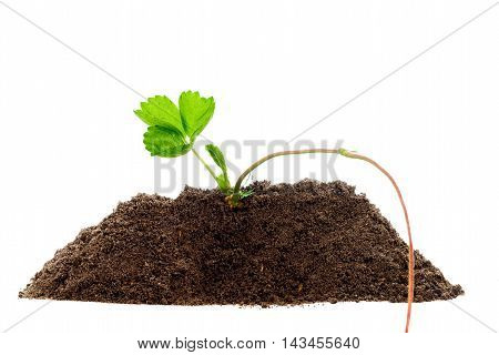 Green Plant Profile Isolated