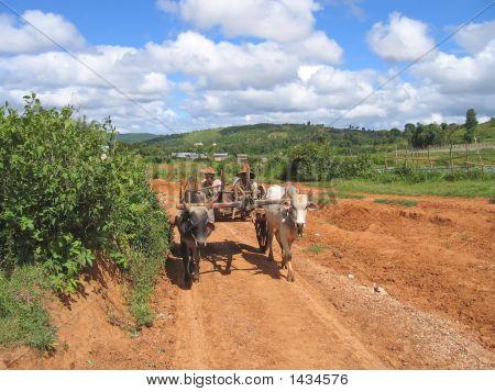 Birman Farmers Driving A Cart, Kalaw, Myanmar