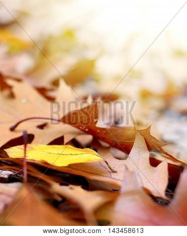 Selective focus of forest floor in autumn with bright sun and copy space.