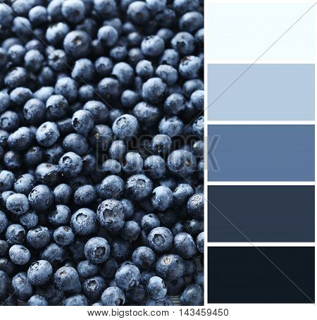 Ripe And Tasty Blueberries Background With Color Palette